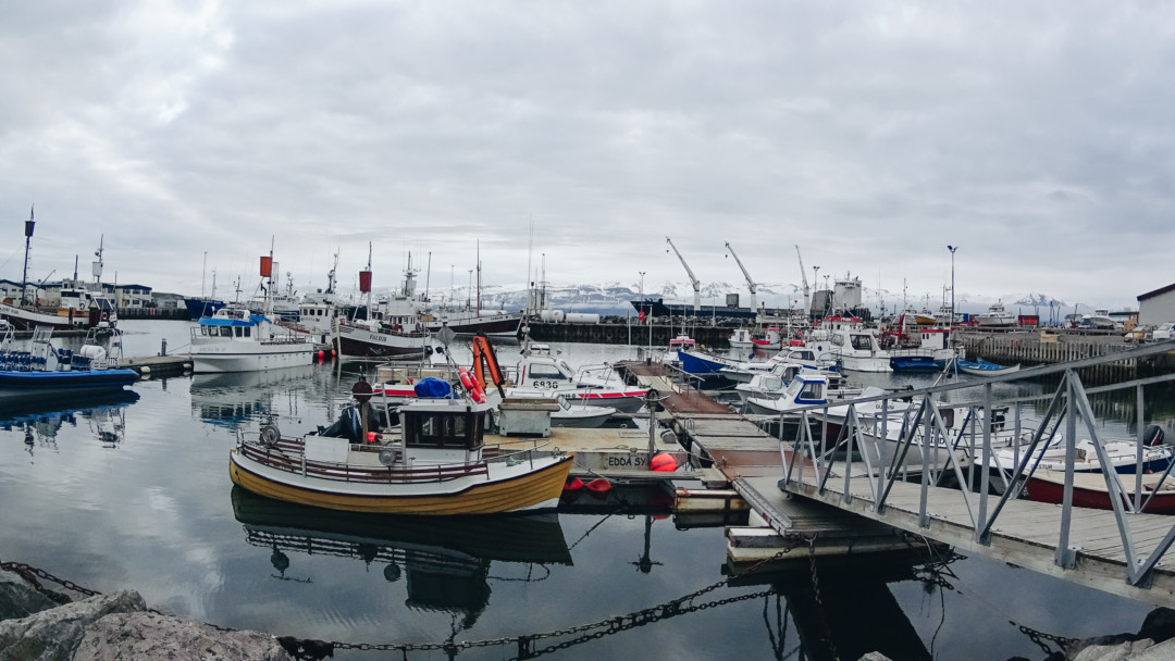 Husavik Harbor Iceland