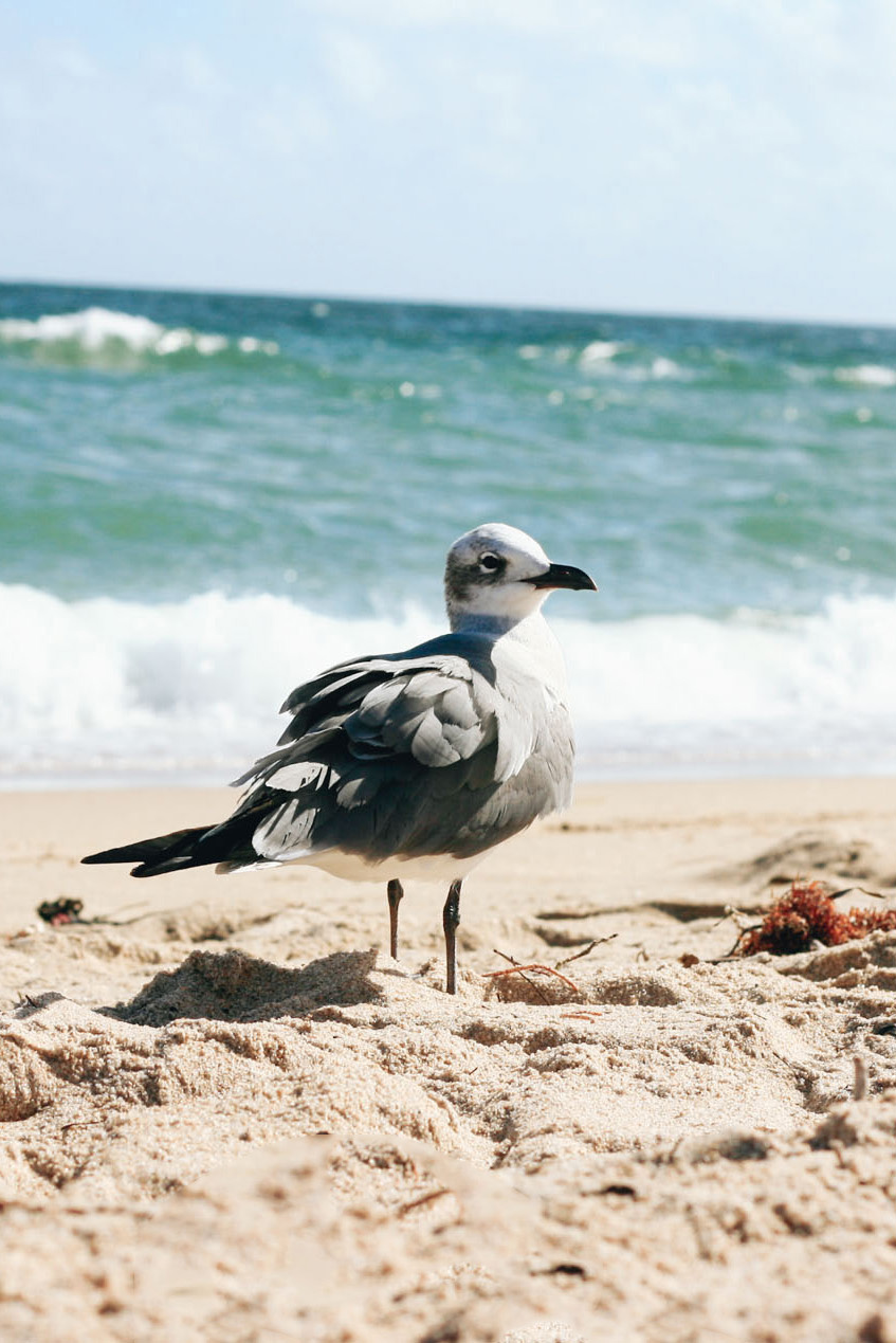 Seagull on Fort Lauderdale Beach, Florida