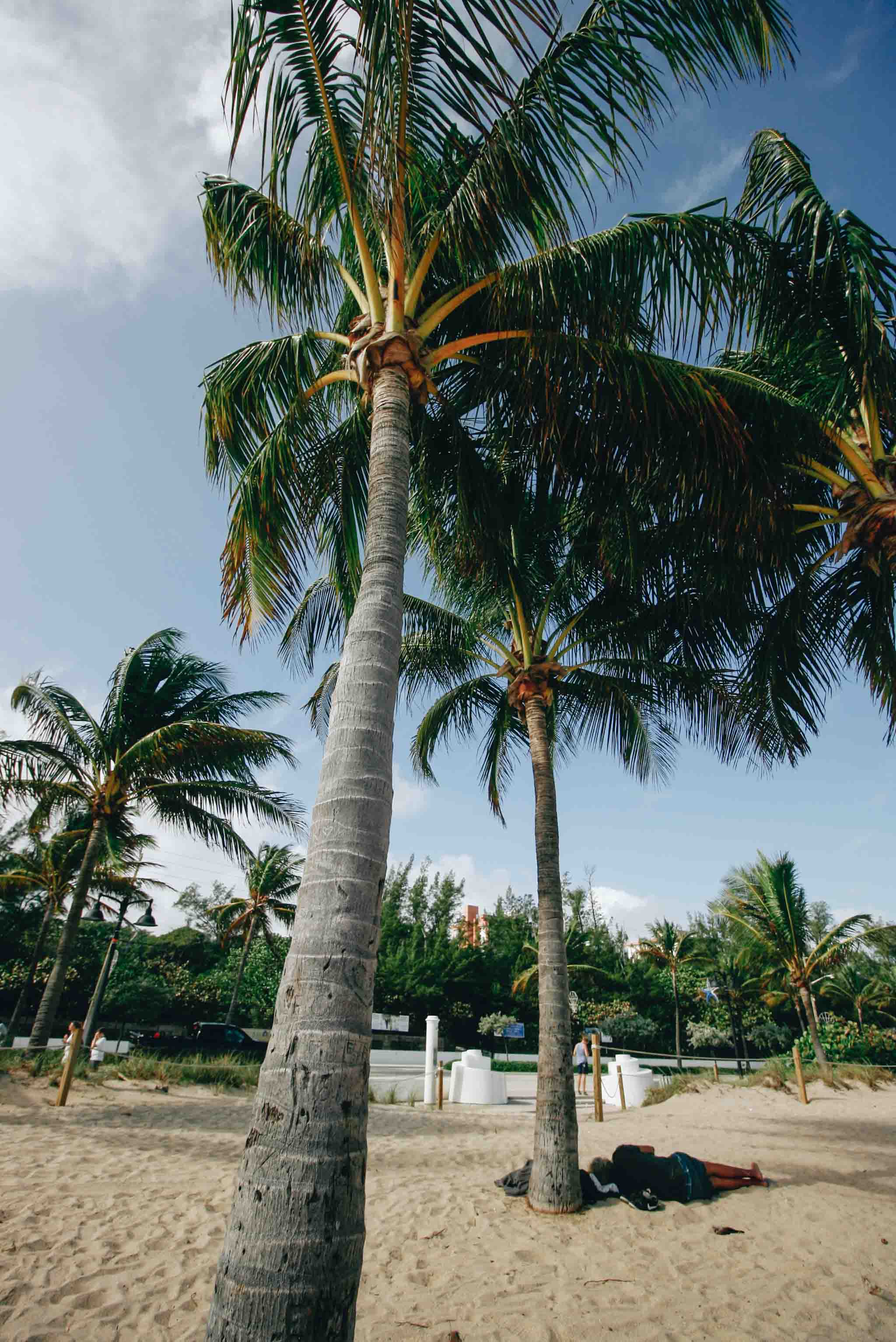 Palm tree on Fort Lauderdale Beach, Florida