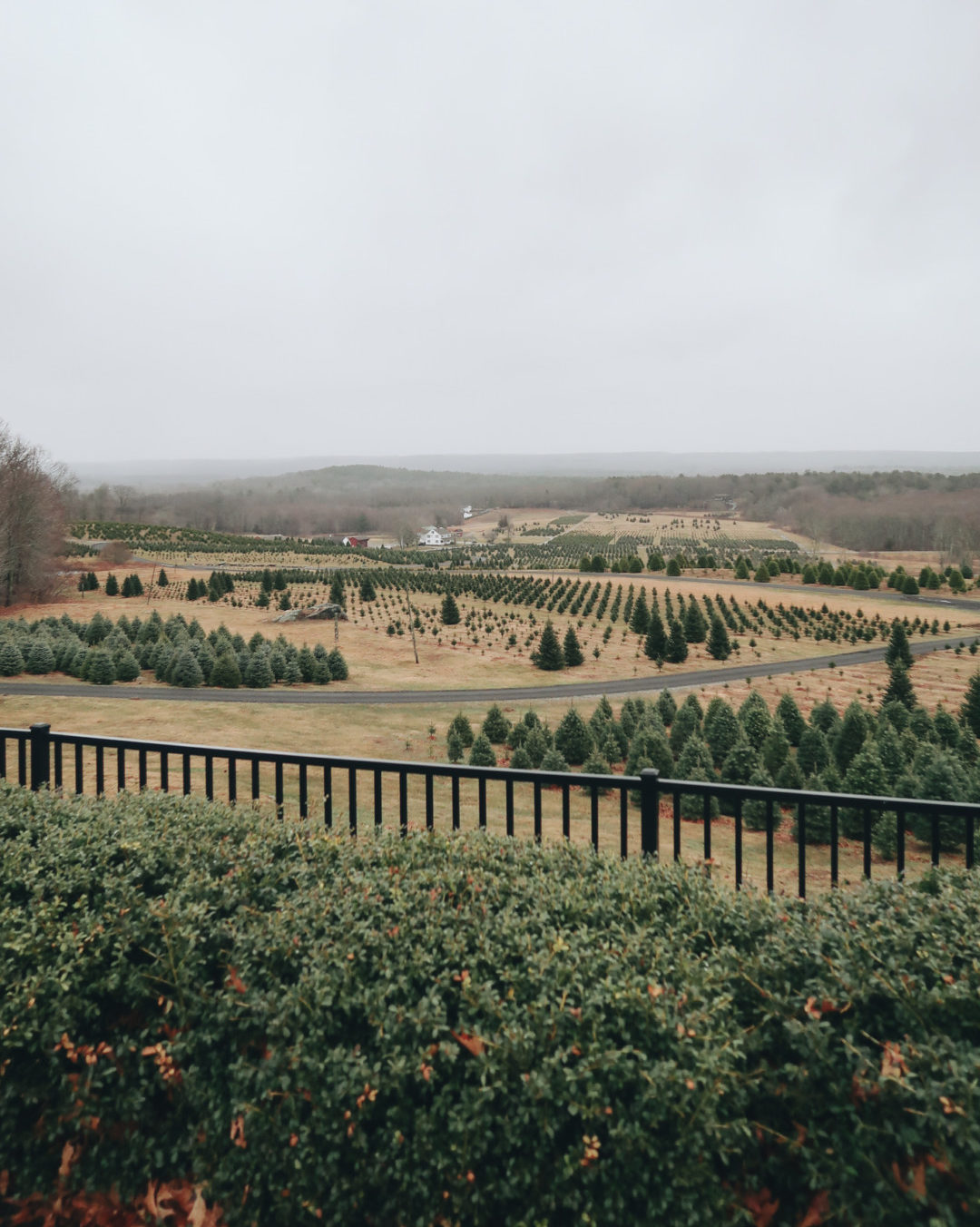 Overlook at Geer Tree Farm in Connecticut