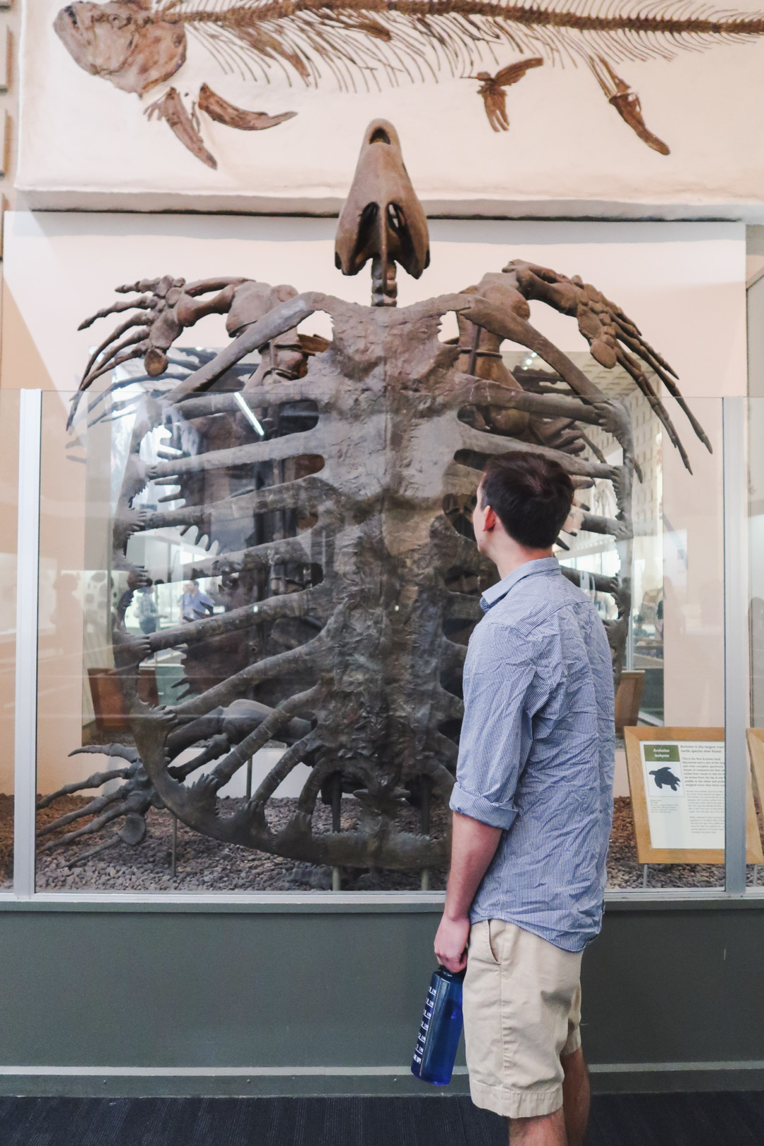 Dan and large prehistoric sea turtle in Peabody Museum, New Haven, CT