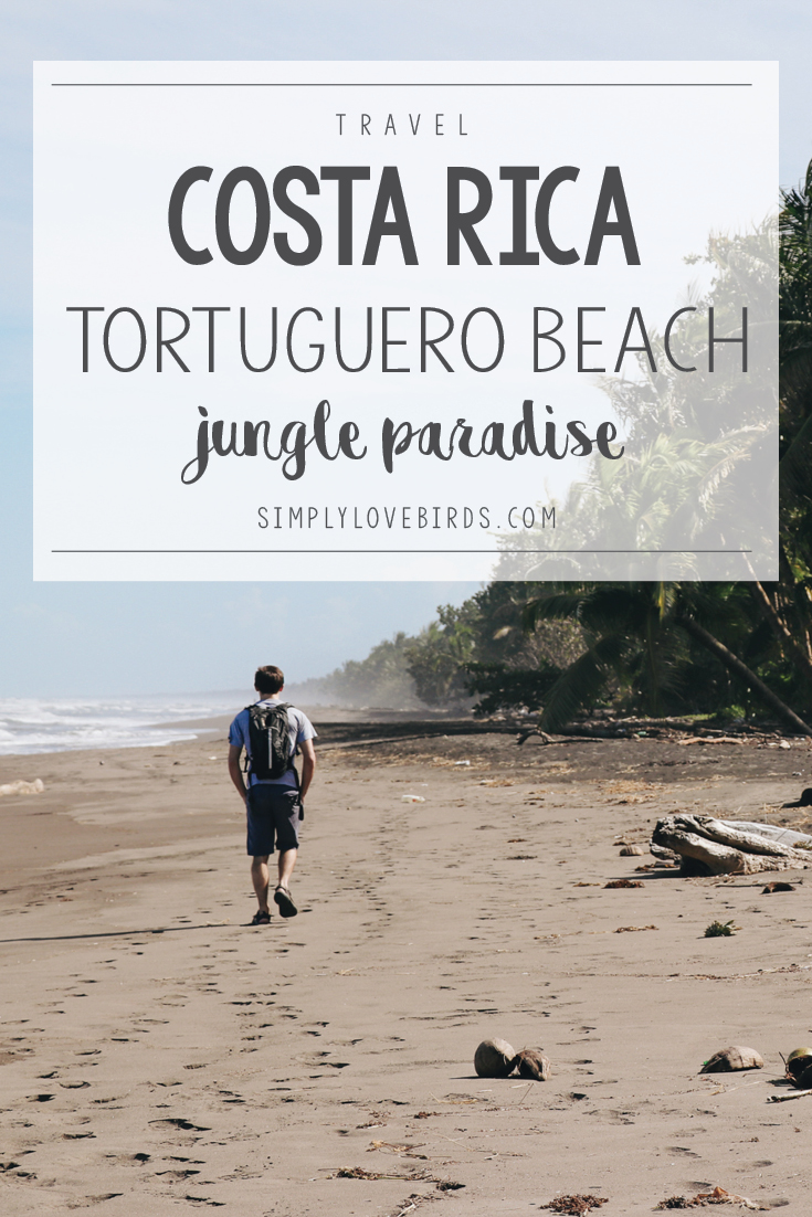Tortuguero Beach: Jungle Paradise in Costa Rica. Read more on simplylovebirds.com.
