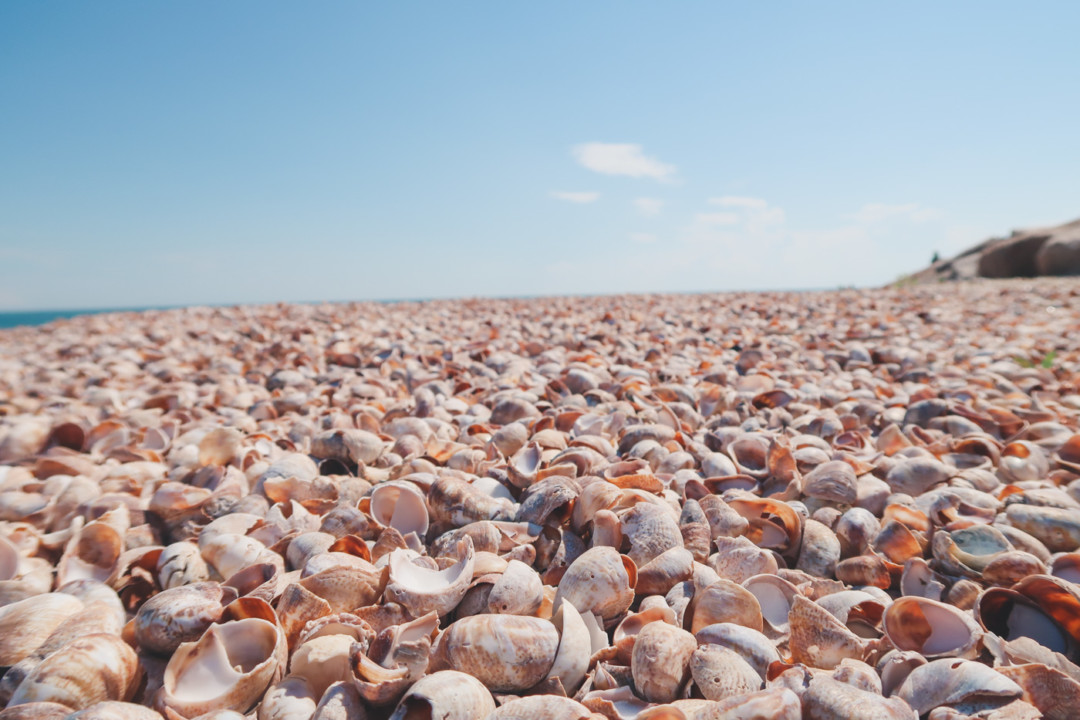 Sea shells on the beach