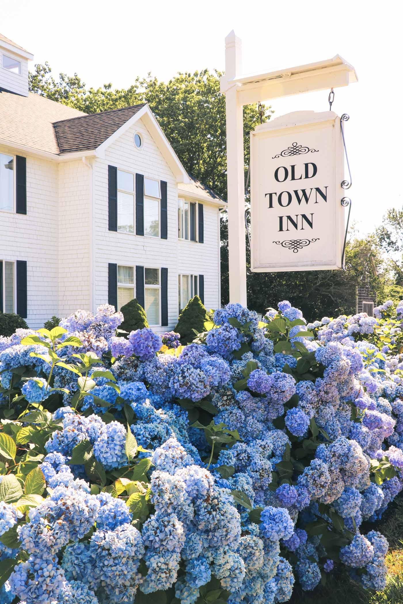 Hydrangeas at Old Town Inn on Block Island
