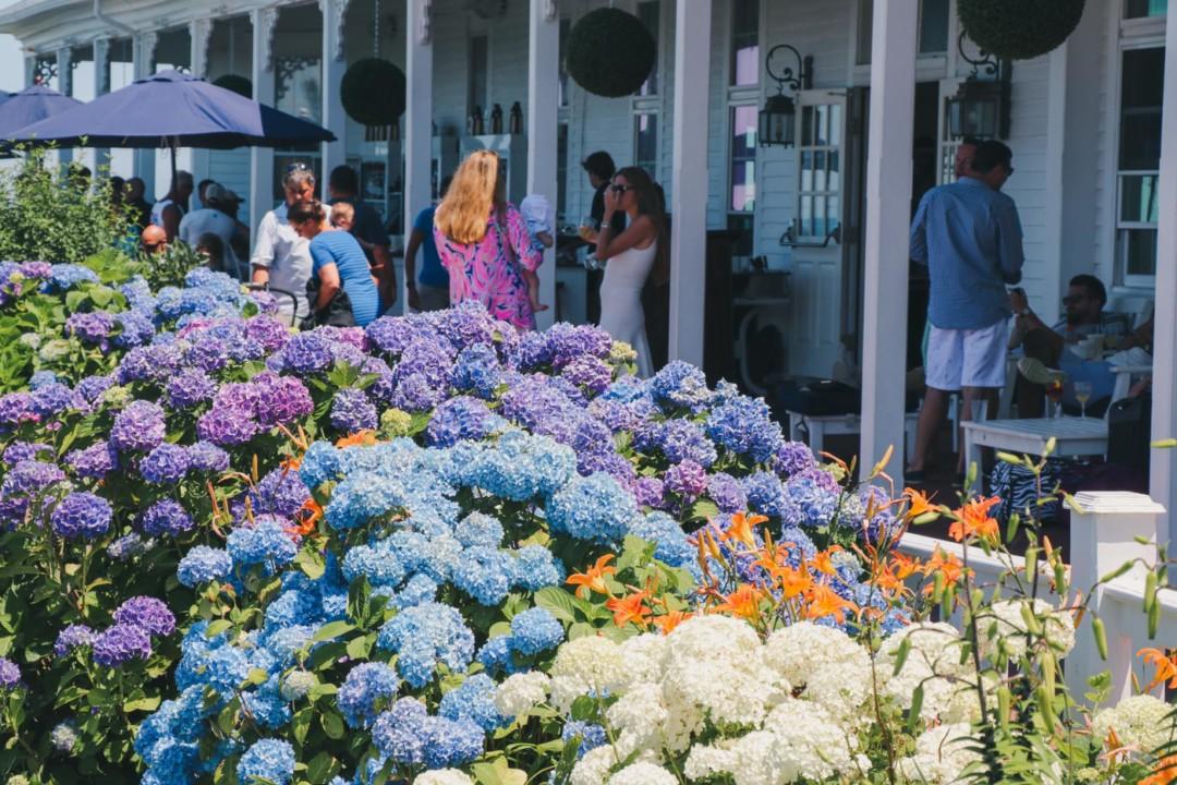 Hydrangeas in front of Spring Hotel, Block Island