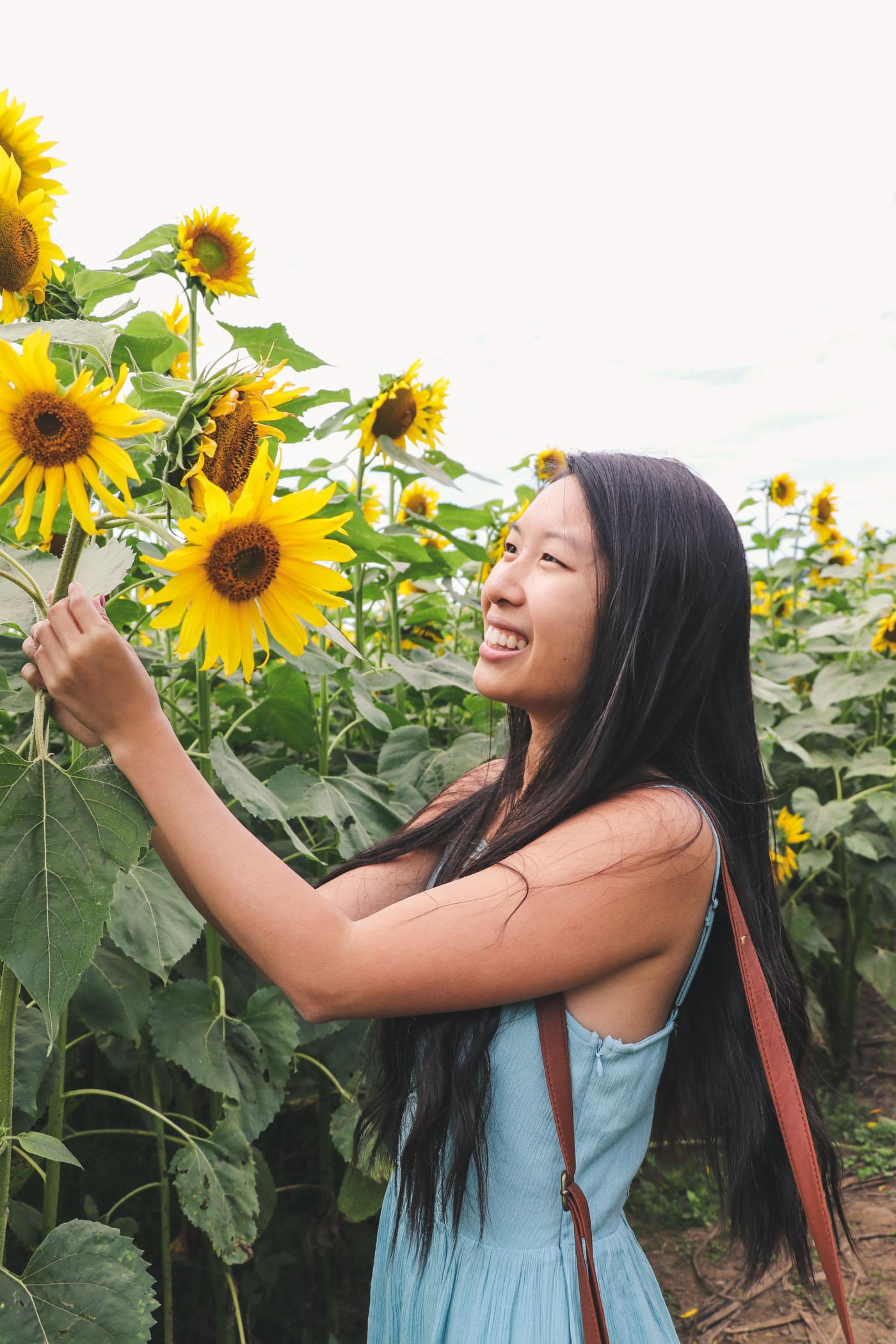 Buttonwood Farms Sunflower Festival, Griswold, Connecticut