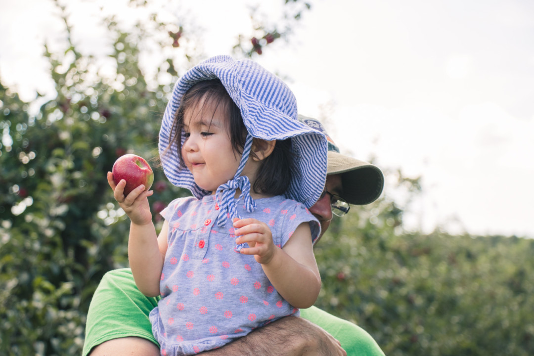 Apple picking with kids / simplylovebirds.com