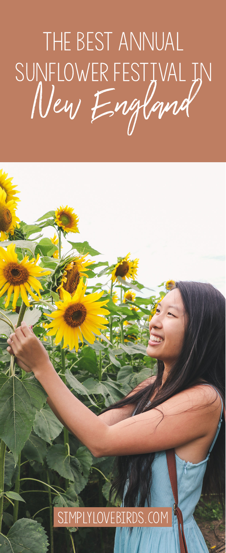 Where to find the best sunflowers in New England / Simply Lovebirds