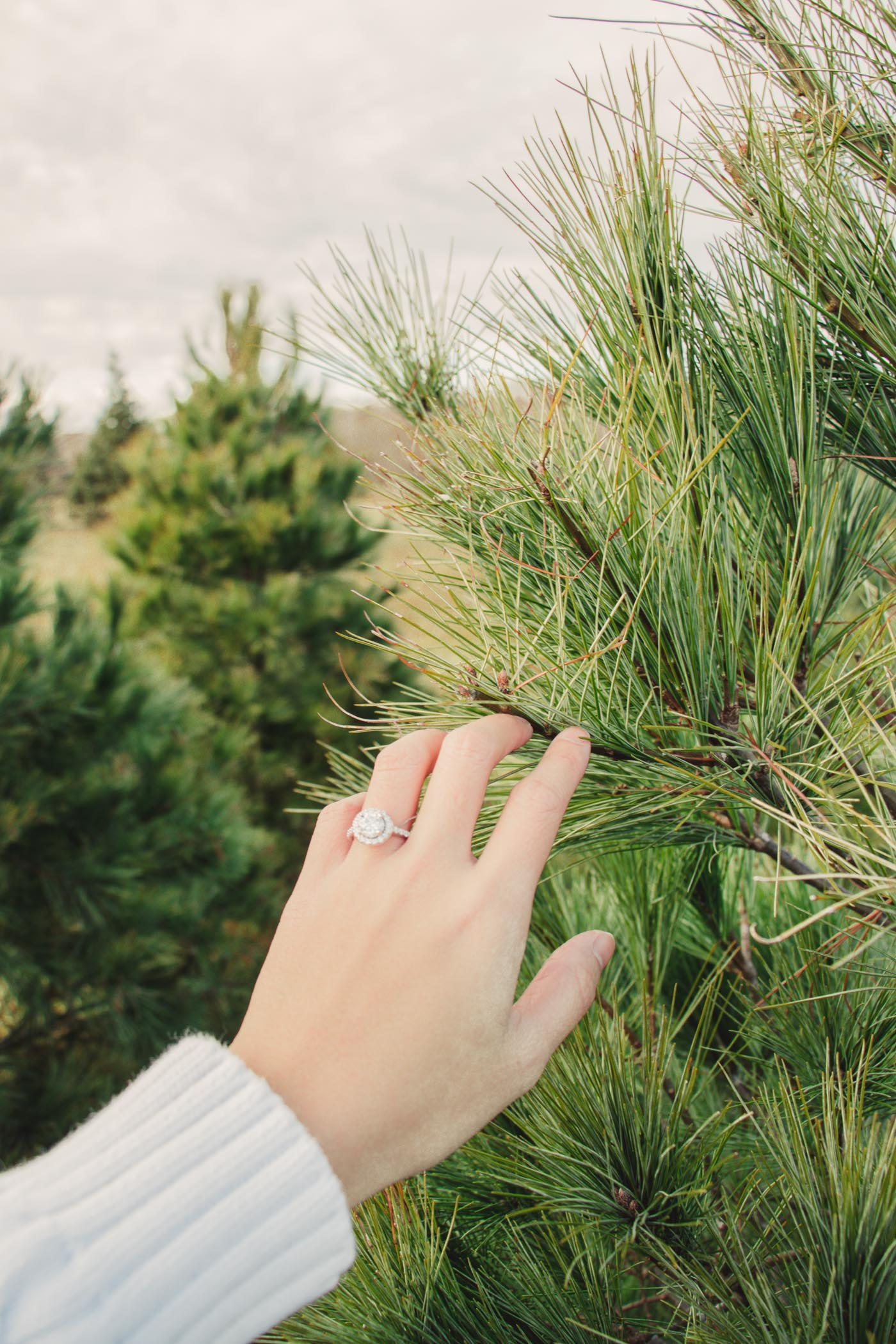 Engagement Ring at the Christmas Tree Farm - Simply Lovebirds